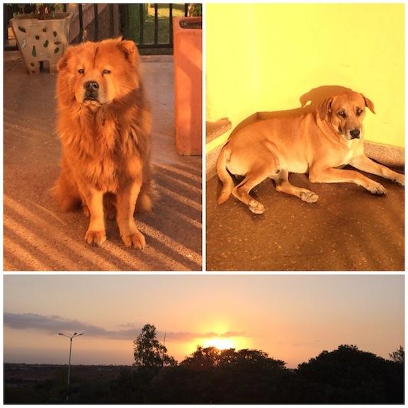 Enriqueta y Chico, los perros guardianes y la salida del sol a las 630 am